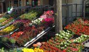 Frühlingsfest und verkaufsoffener Sonntag fallen aus