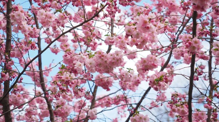 Wir sind Blütenstadt